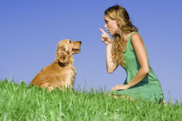 Como treinar seu cão