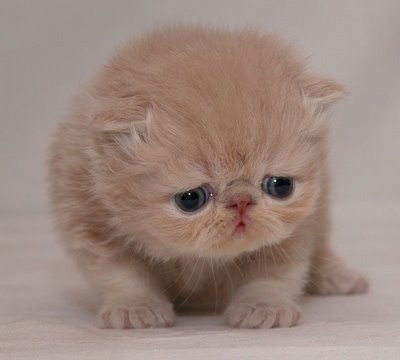 gato depressivo