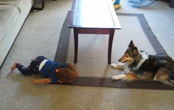 colie se diverte com criança