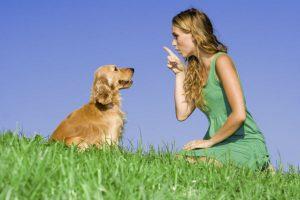 como treinar cachorro